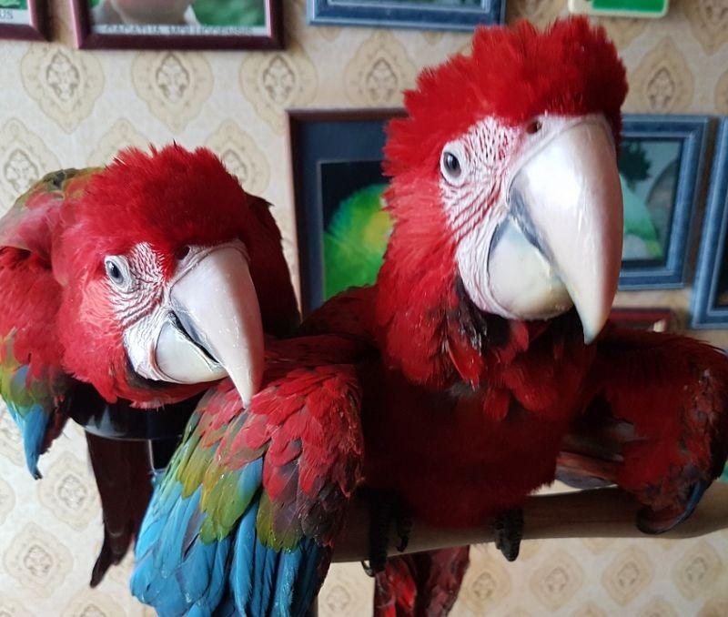 Экзотические птицыи животные из питомников Европы